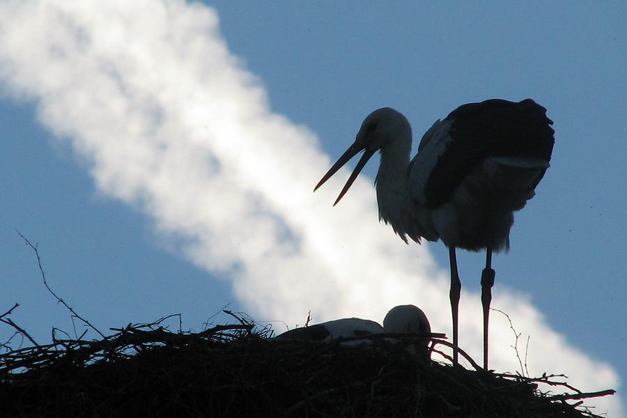 the stork's speech